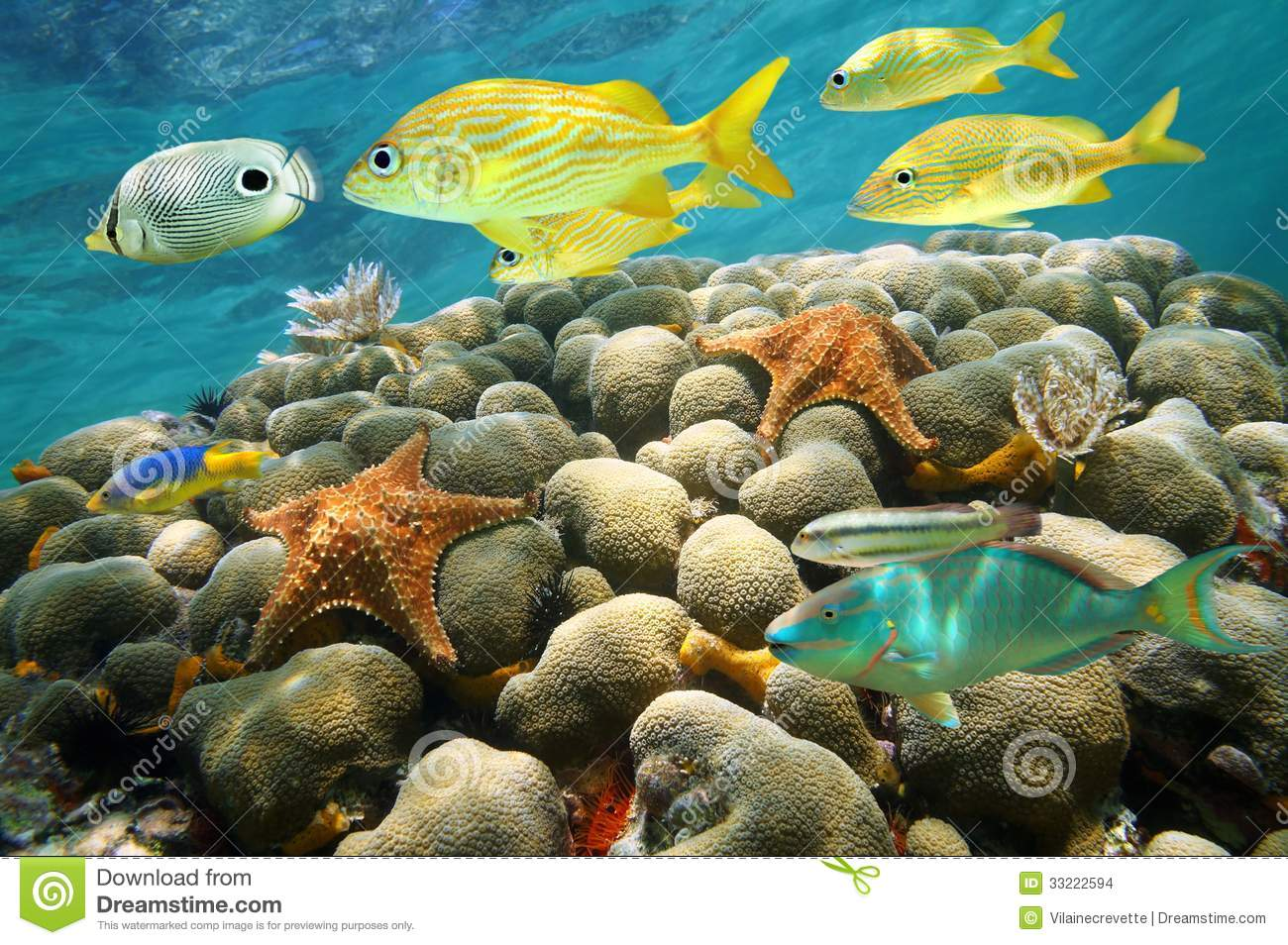 Starfish and tropical fish in a coral reef stock images for Caribbean reef fish