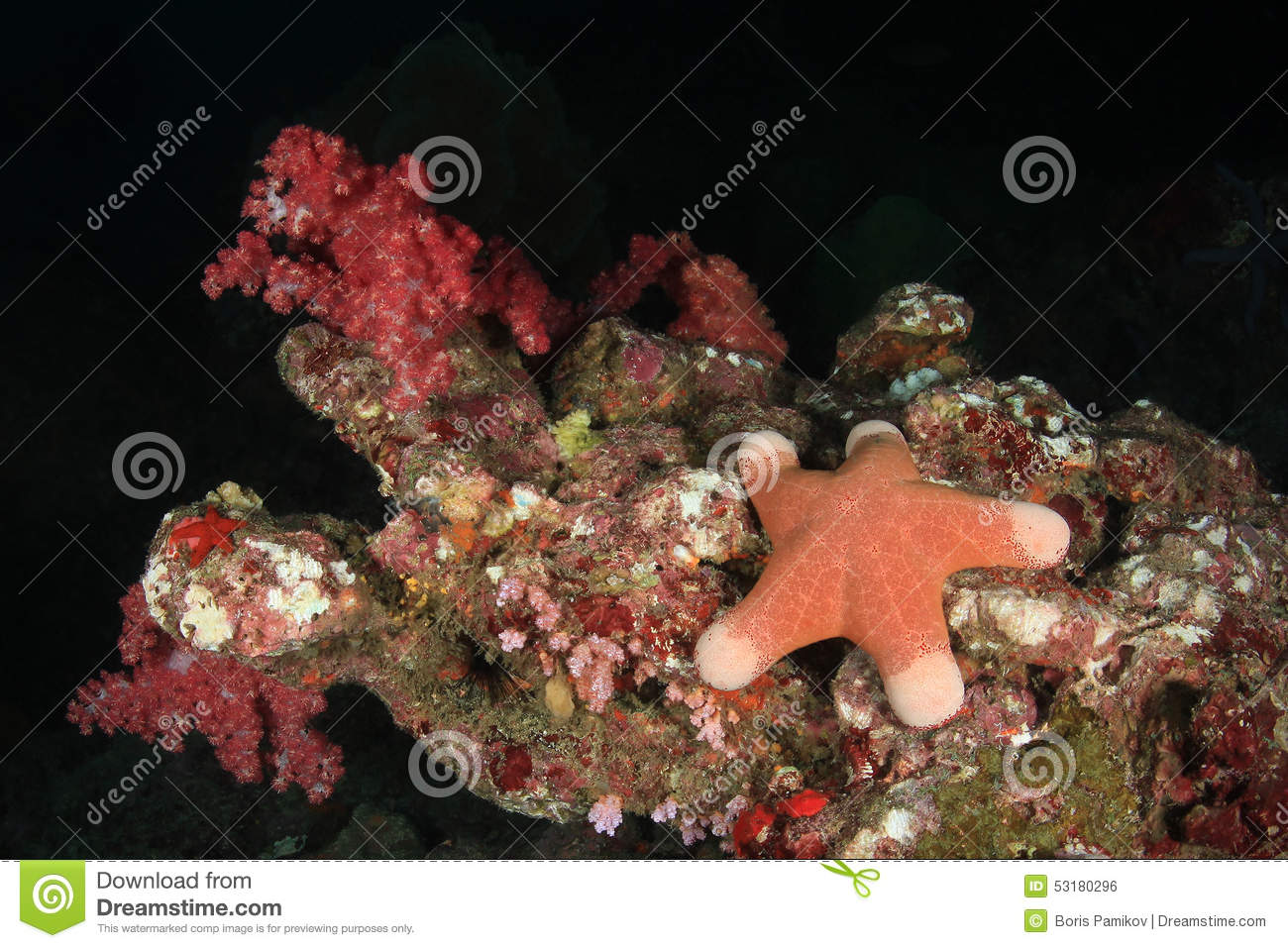 Starfish under water on bottom of Andaman sea, Thailand