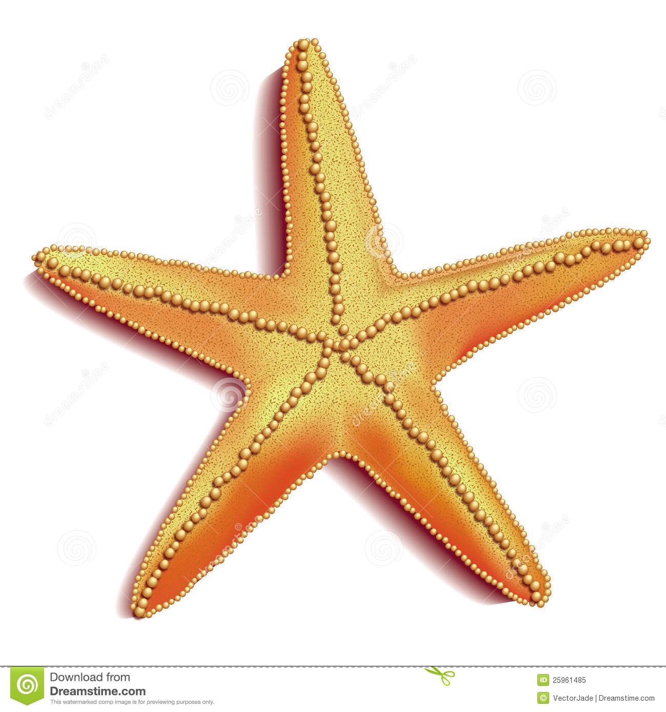 Starfish Vector Royalty Free Stock Photo - Image: 25961485