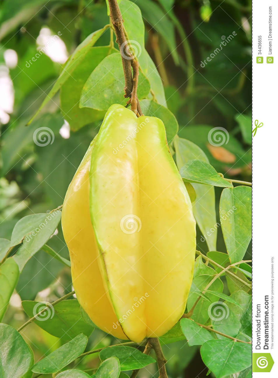 how to eat star fruit video
