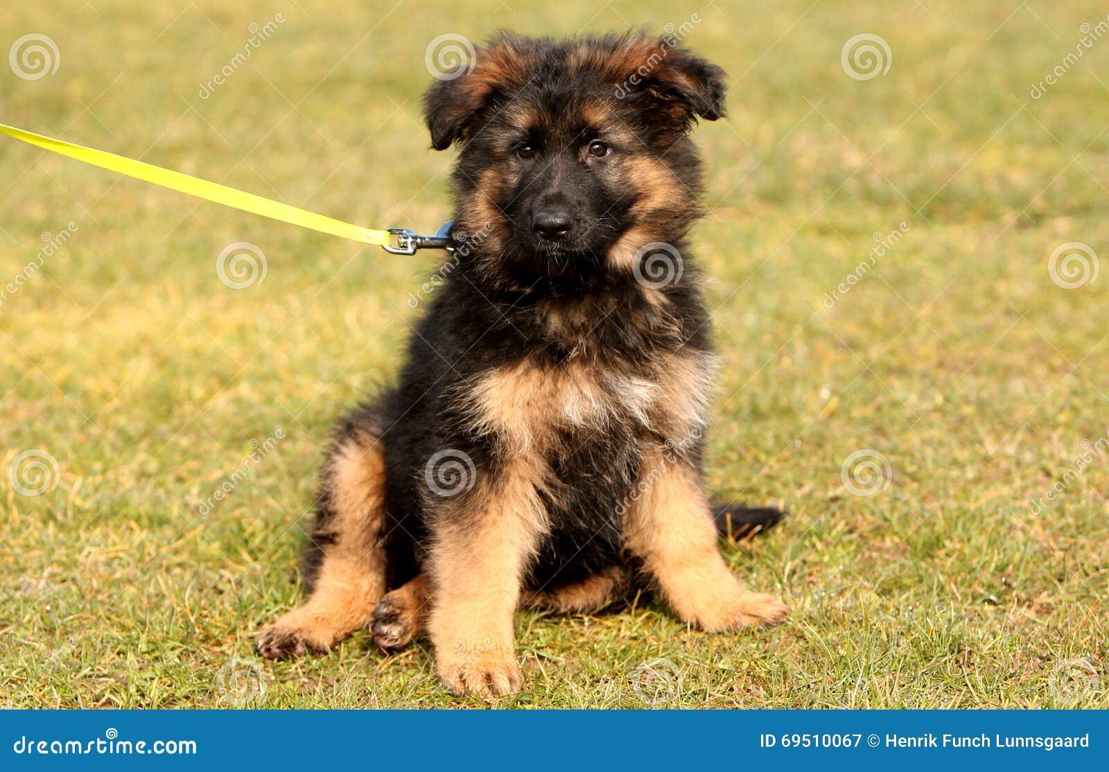 Big Black Wooly Dog
