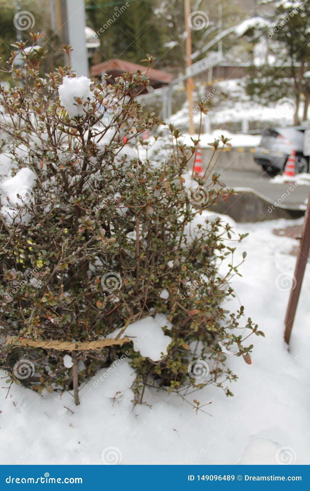 Starka tr?d f?r suddigt foto i sn?vintern