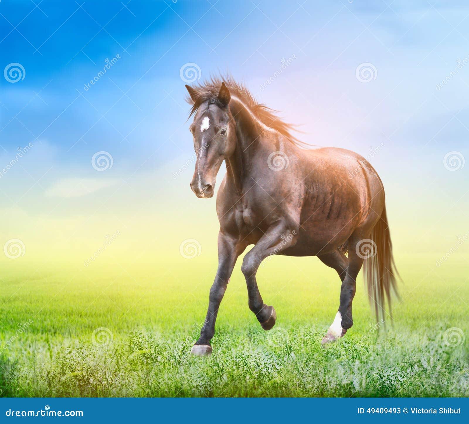 Download Starkes Pferd, Das Auf Dem Grünen Feld Läuft Stockbild - Bild von blut, reiter: 49409493