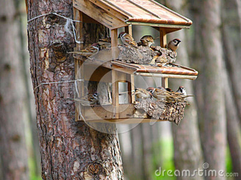 A starling house for birds