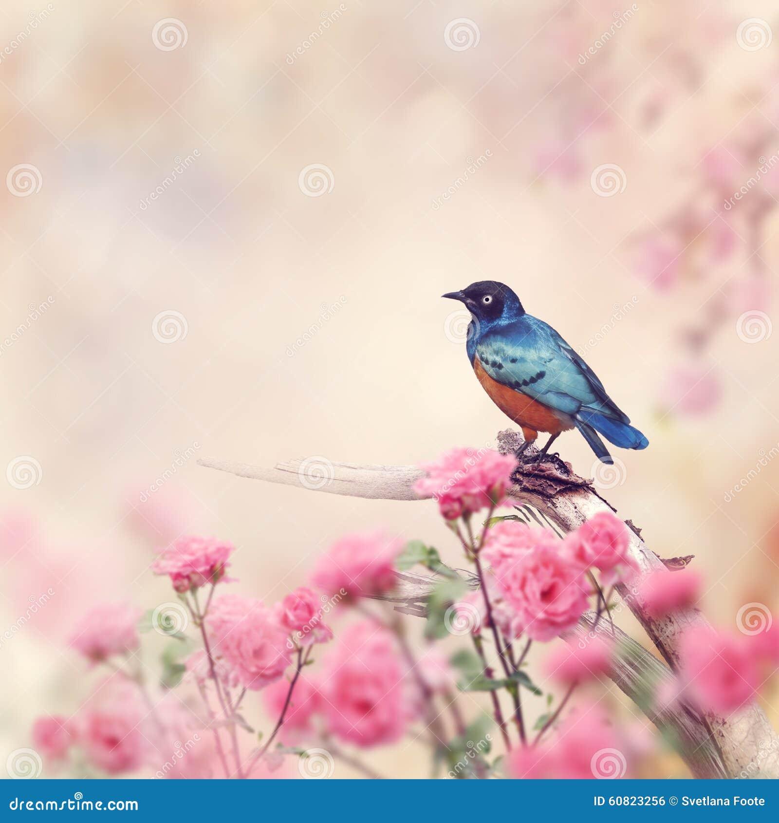 Starling magnífico