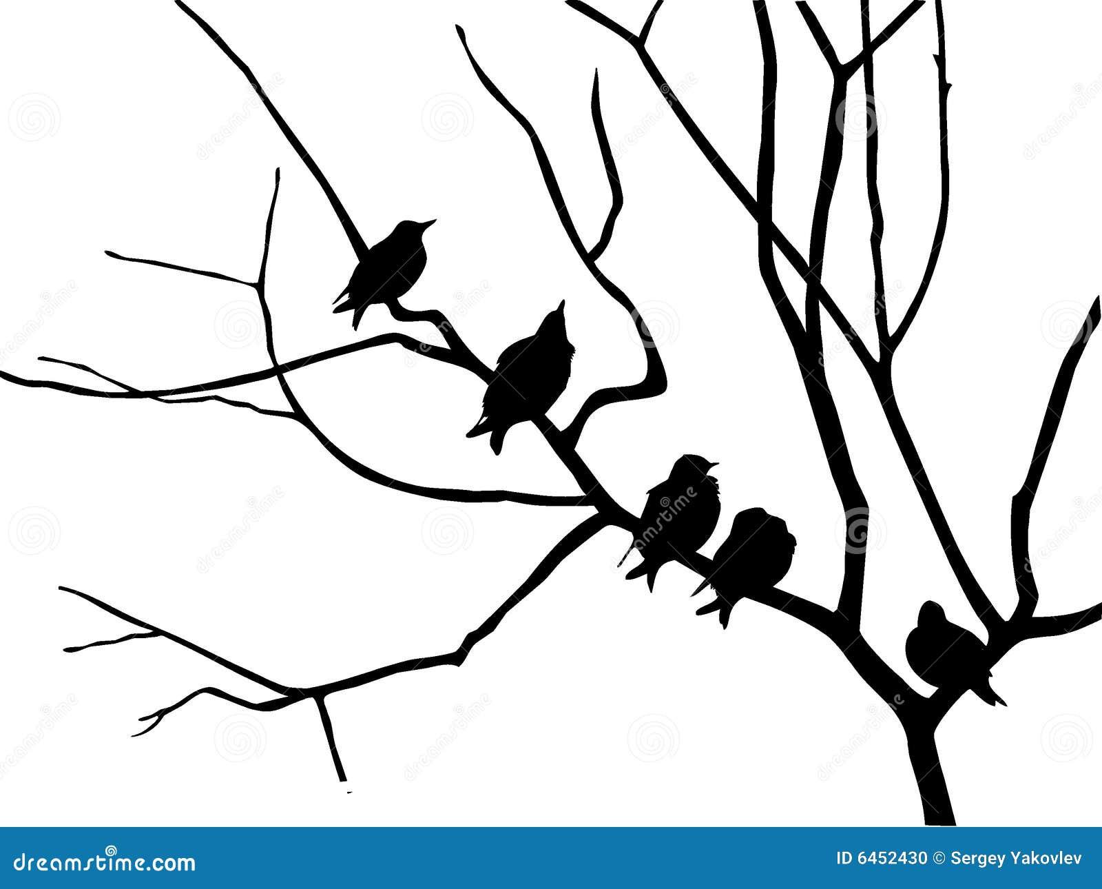 Starling sylwetka