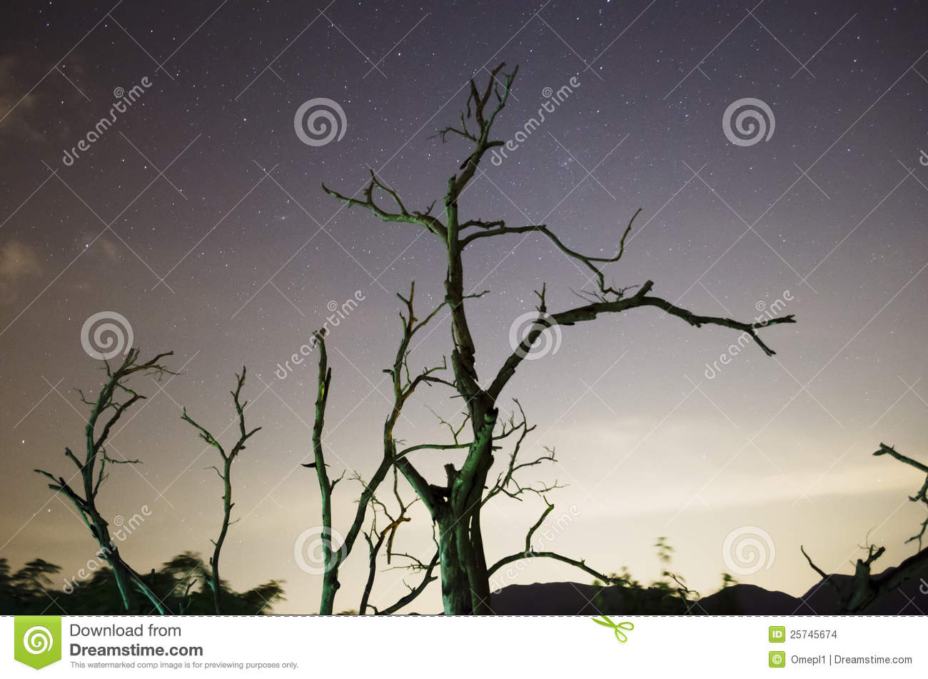 Starry Night Sky with Withered trees