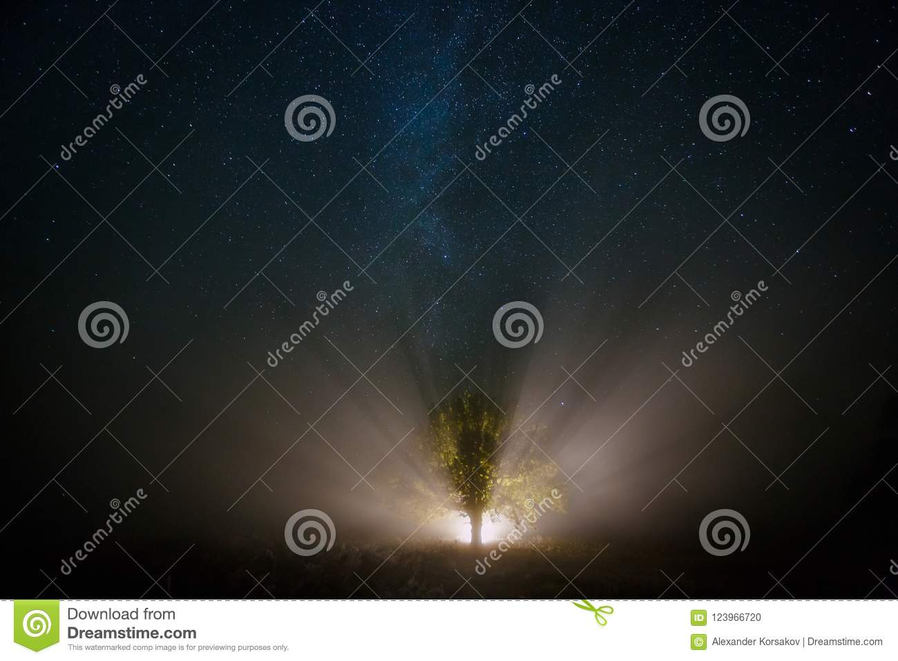 Starry sky and magical tree lit by torch
