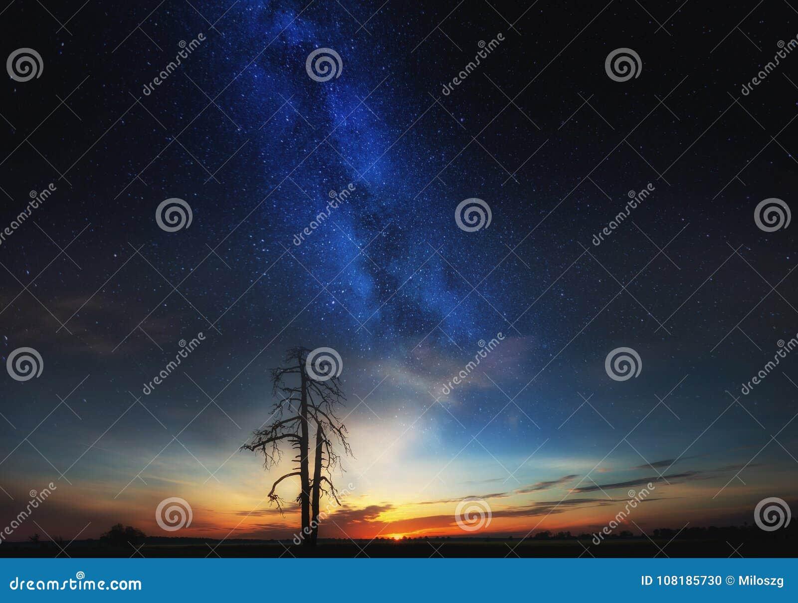 Starry sky over field and dead tree, fine art landscape