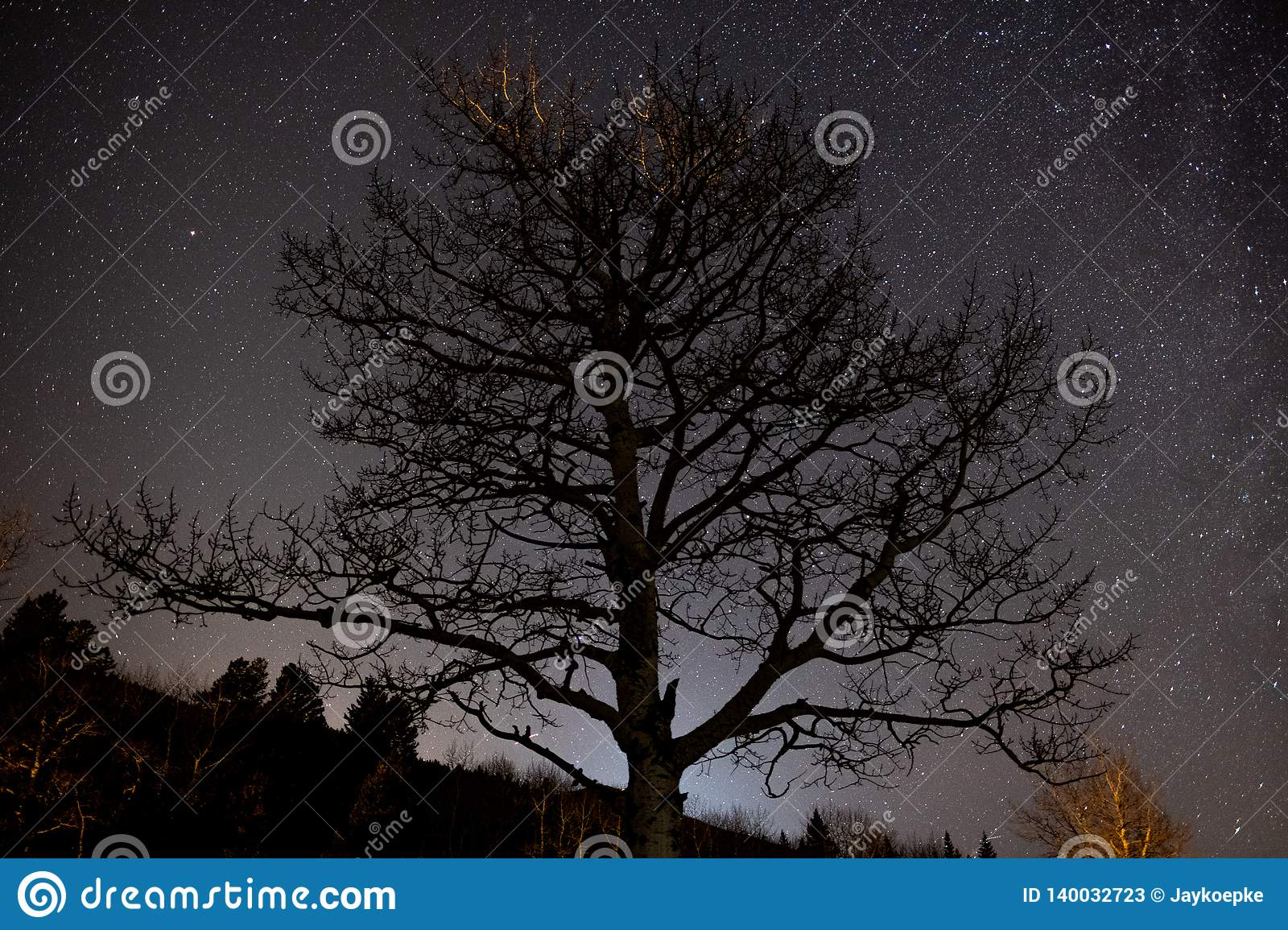 Stars shine behind an aspen tree in winter
