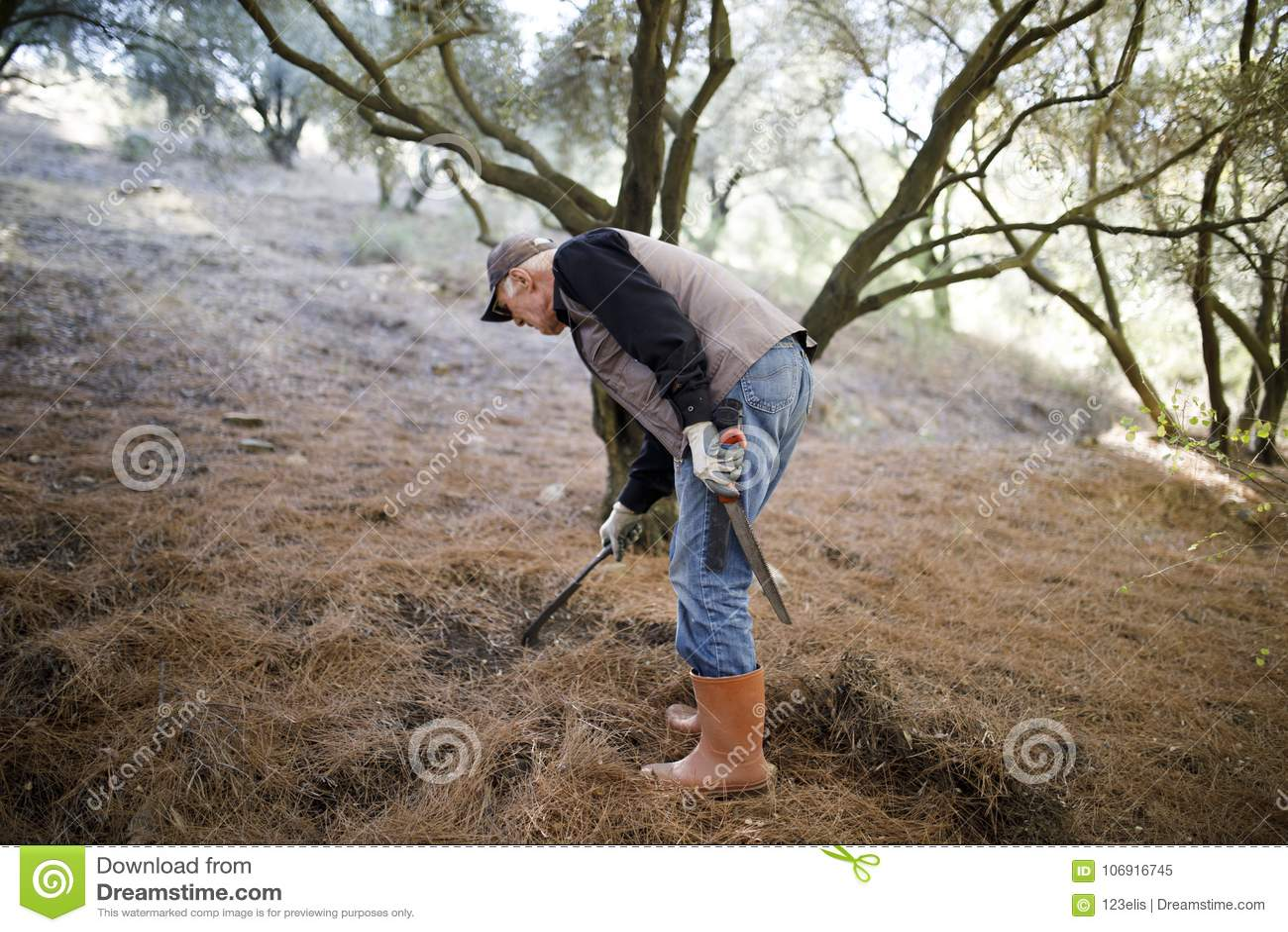 Starszy rolnik przy lasem
