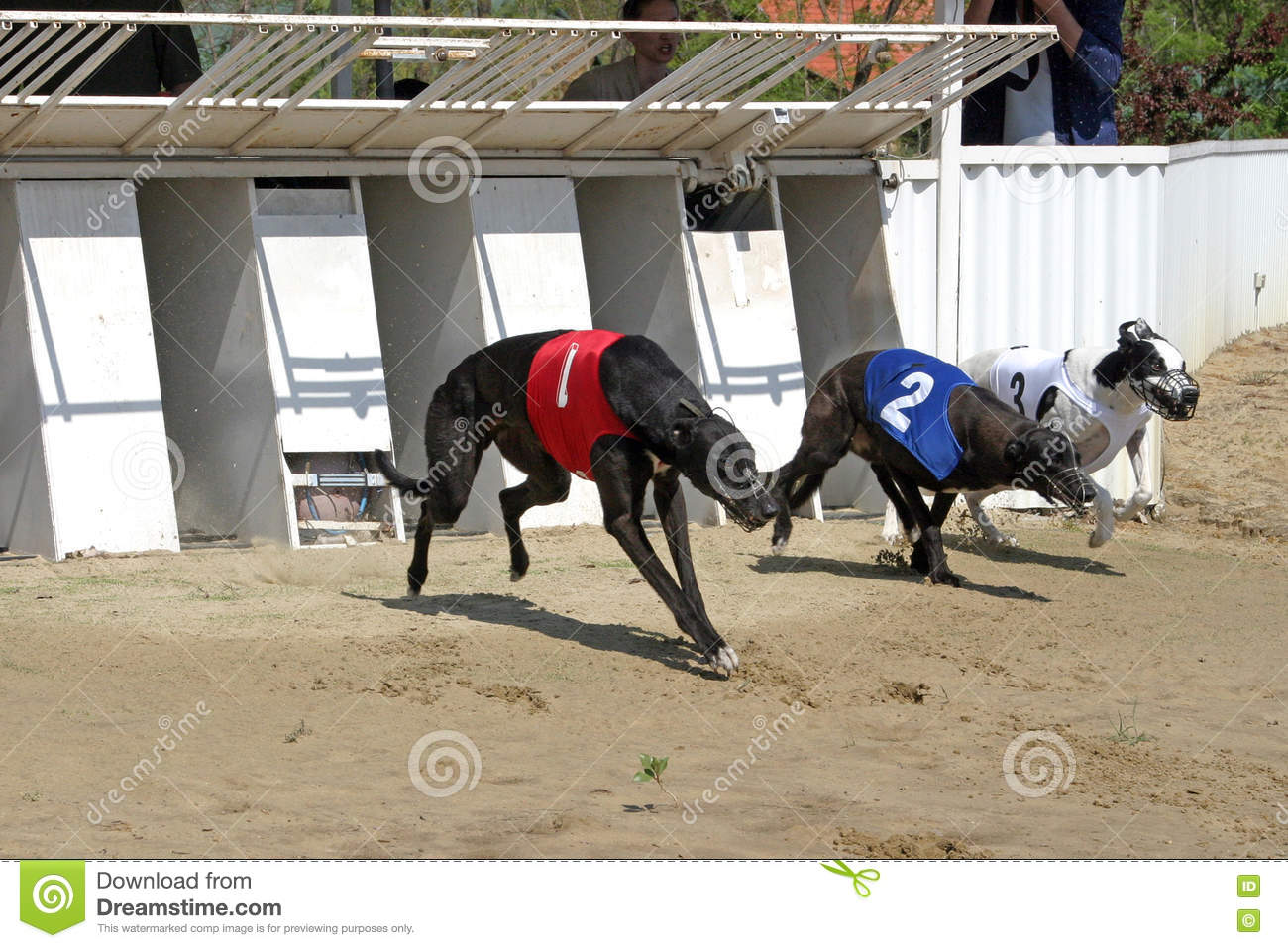 how to win at dog racing