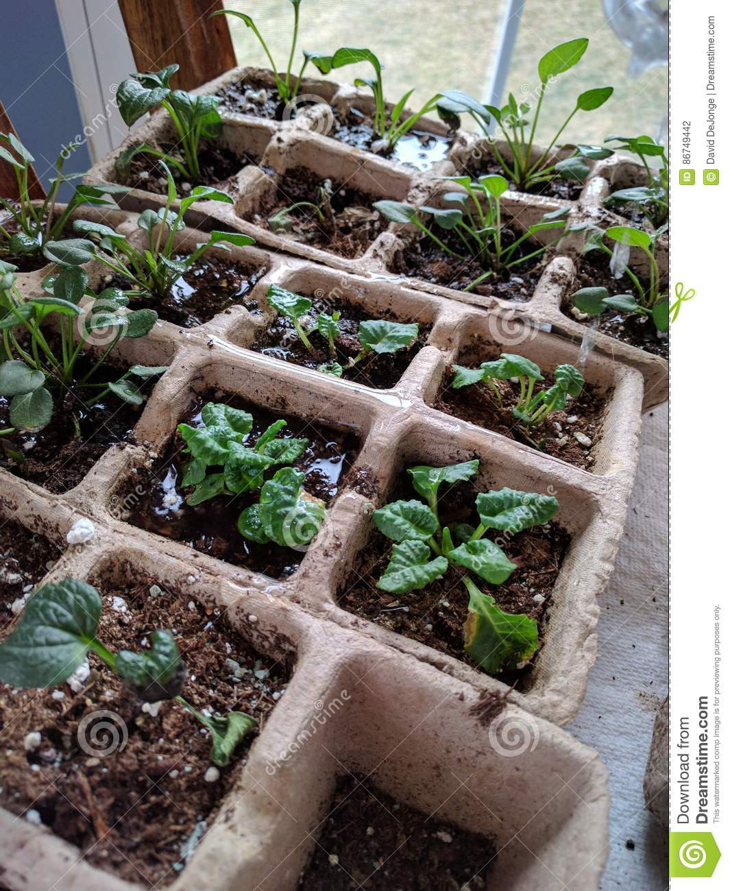 Starting your garden indoors seedlings emerge in starter pots starting your garden indoors seedlings emerge in starter pots workwithnaturefo