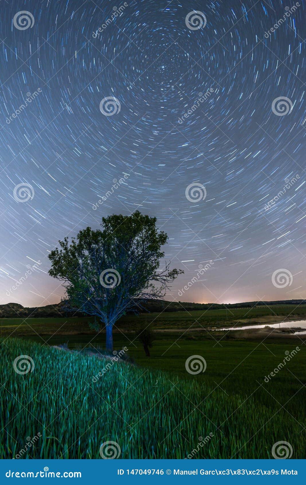 Startrails circumpolares con un árbol