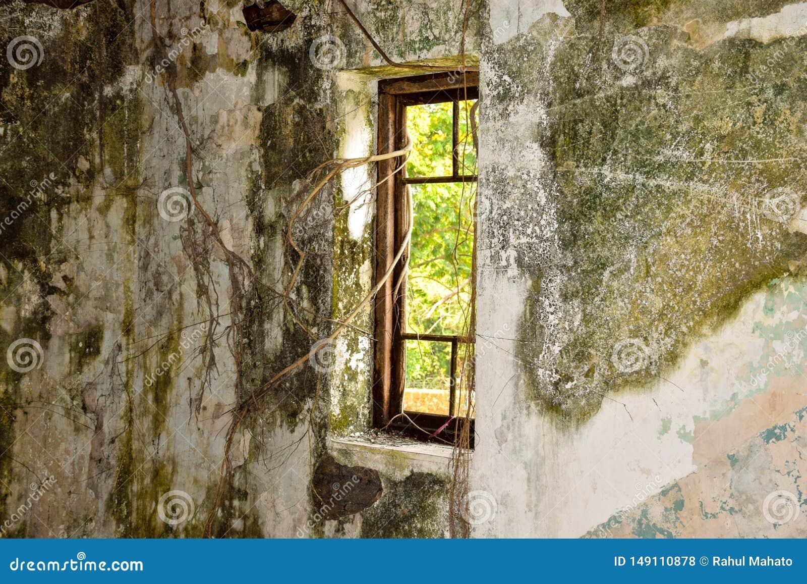 Stary awaryjny okno z banyan tokuje w ciemnym pokoju