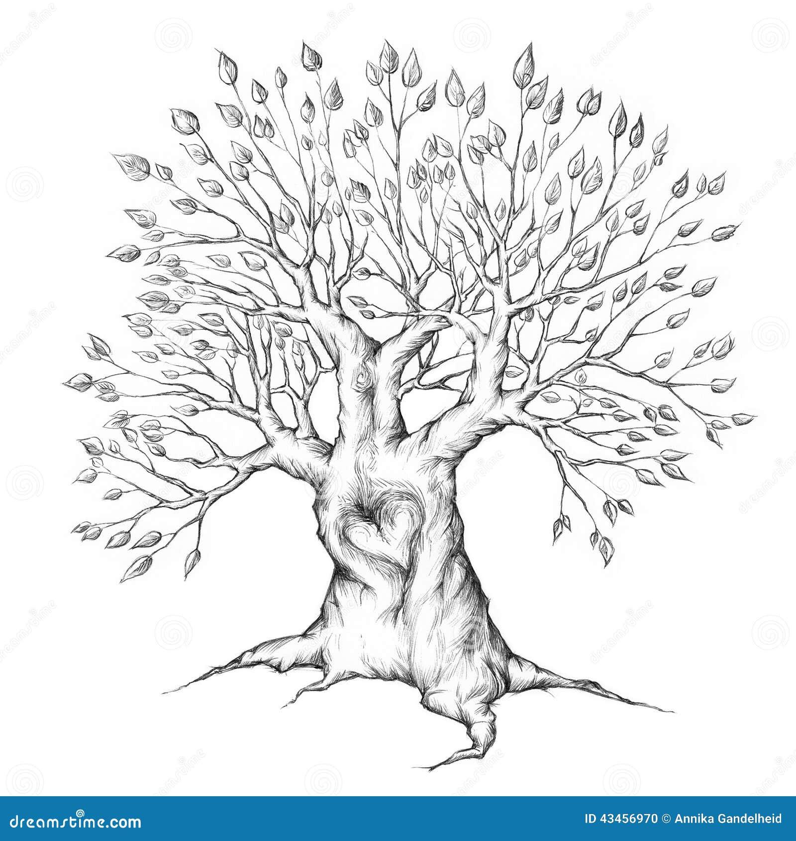 Stary drzewo z sercem