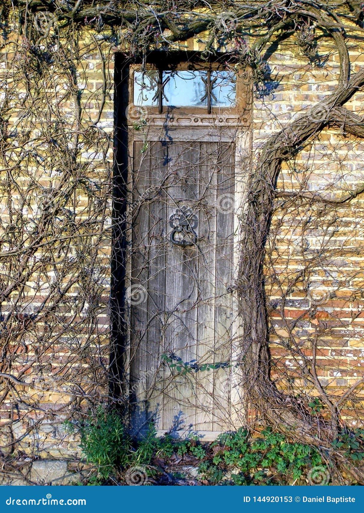 Stary drzwi przerastający z roślinnością