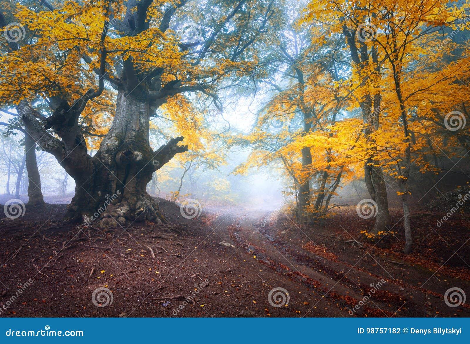 Stary magiczny drzewo z dużymi czerwień liśćmi, gałąź i pomarańcze i