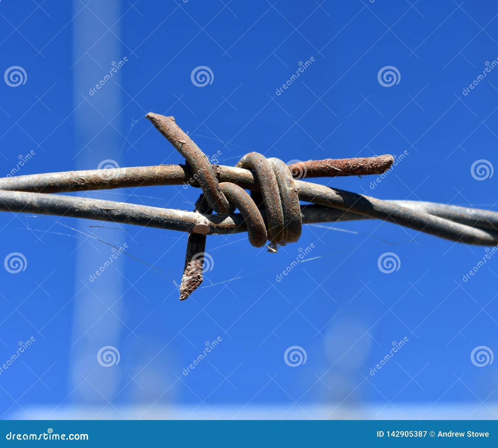 Stary ośniedziały drut kolczasty, zakończenie w górę Elektryfikujący ogrodzenie z drutem kolczastym