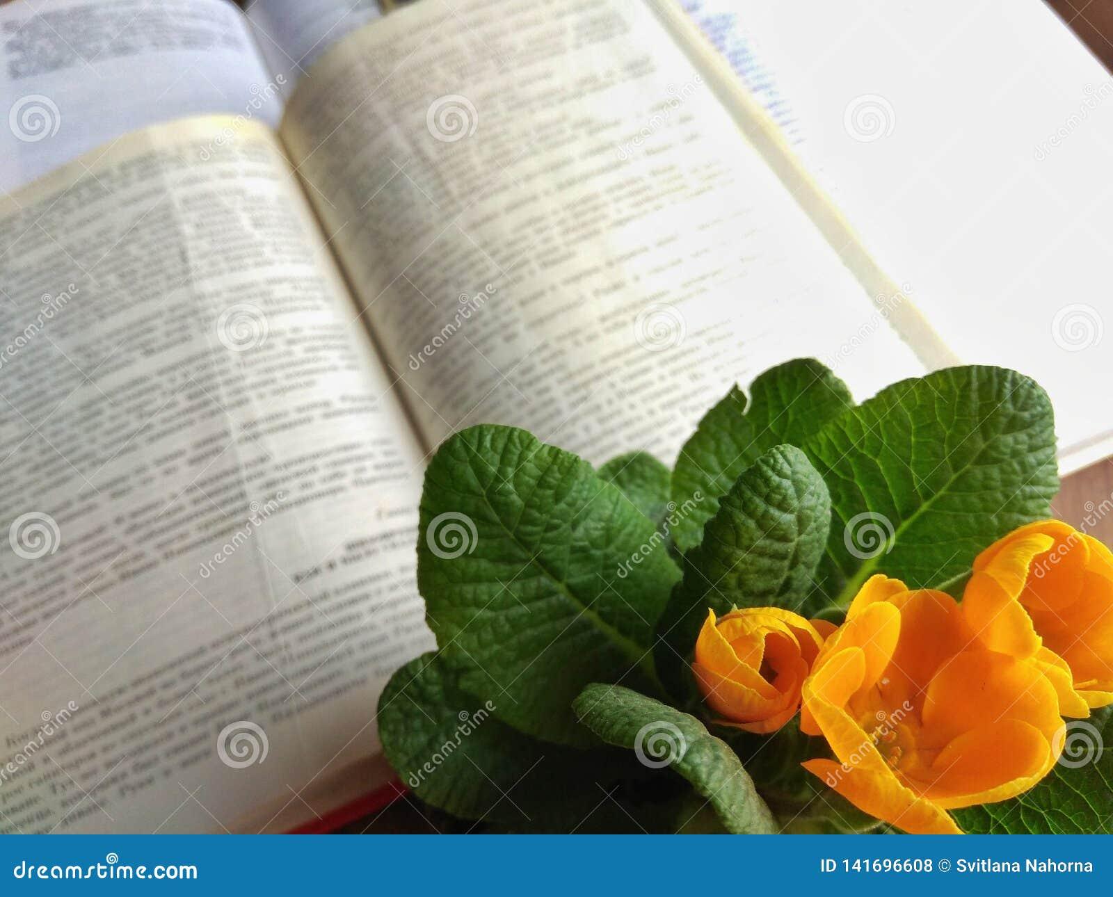Stary otwiera książki na windowsill lub zgłasza z światłem dziennym