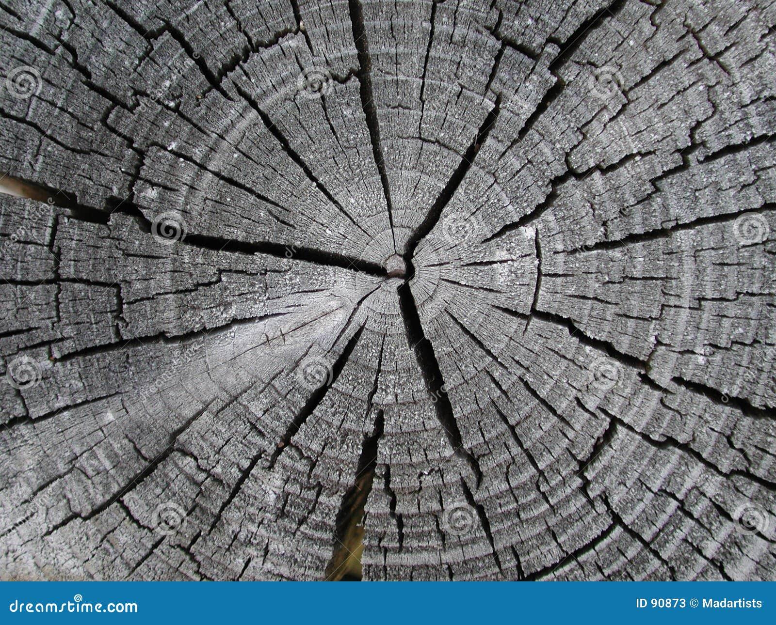 Stary pierścień tekstury drewno drzew