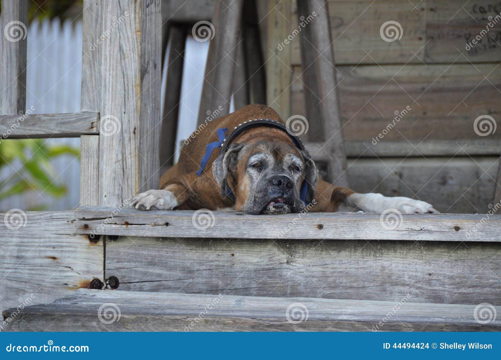 Stary pies