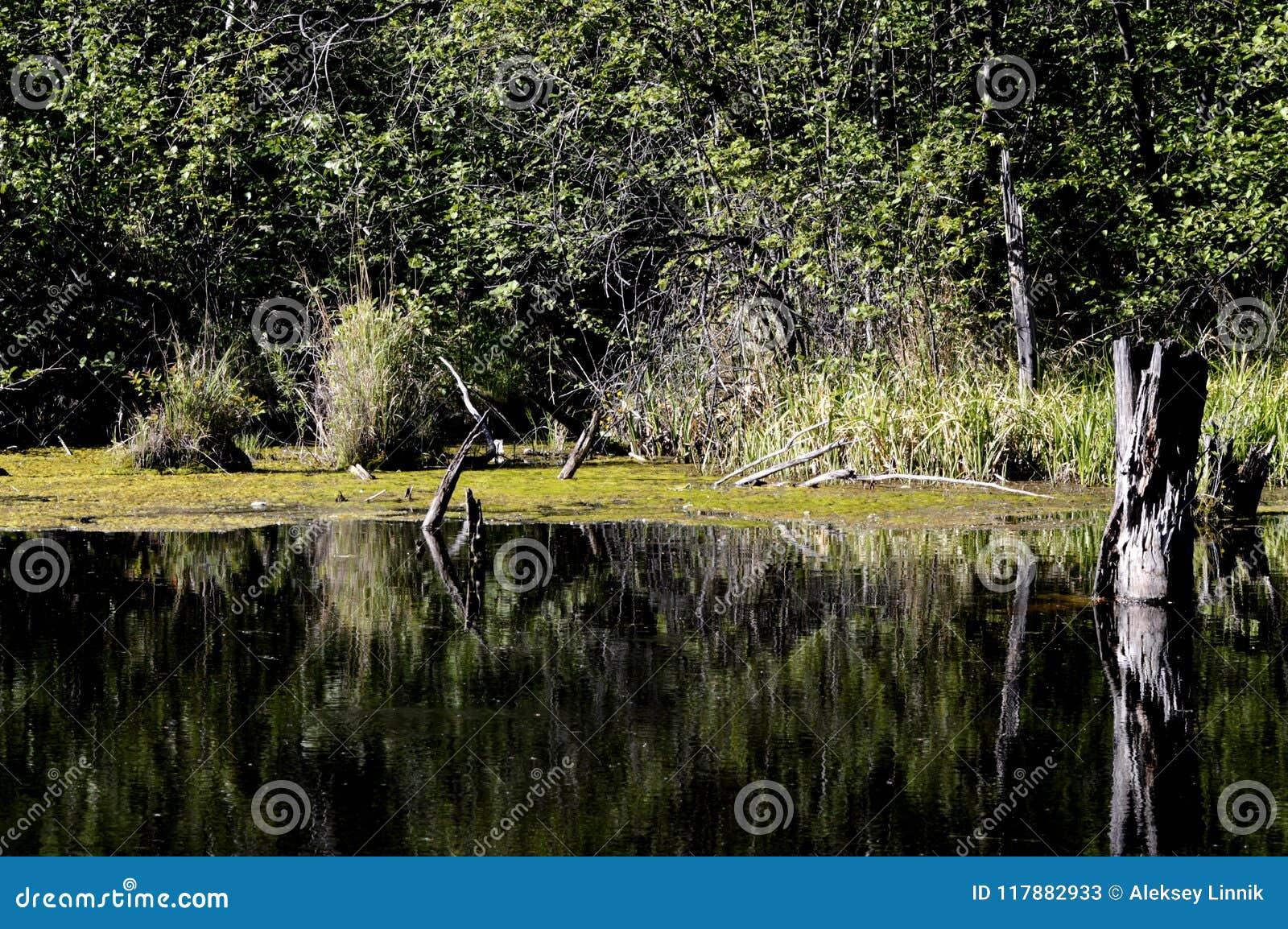 Stary przerastający jezioro
