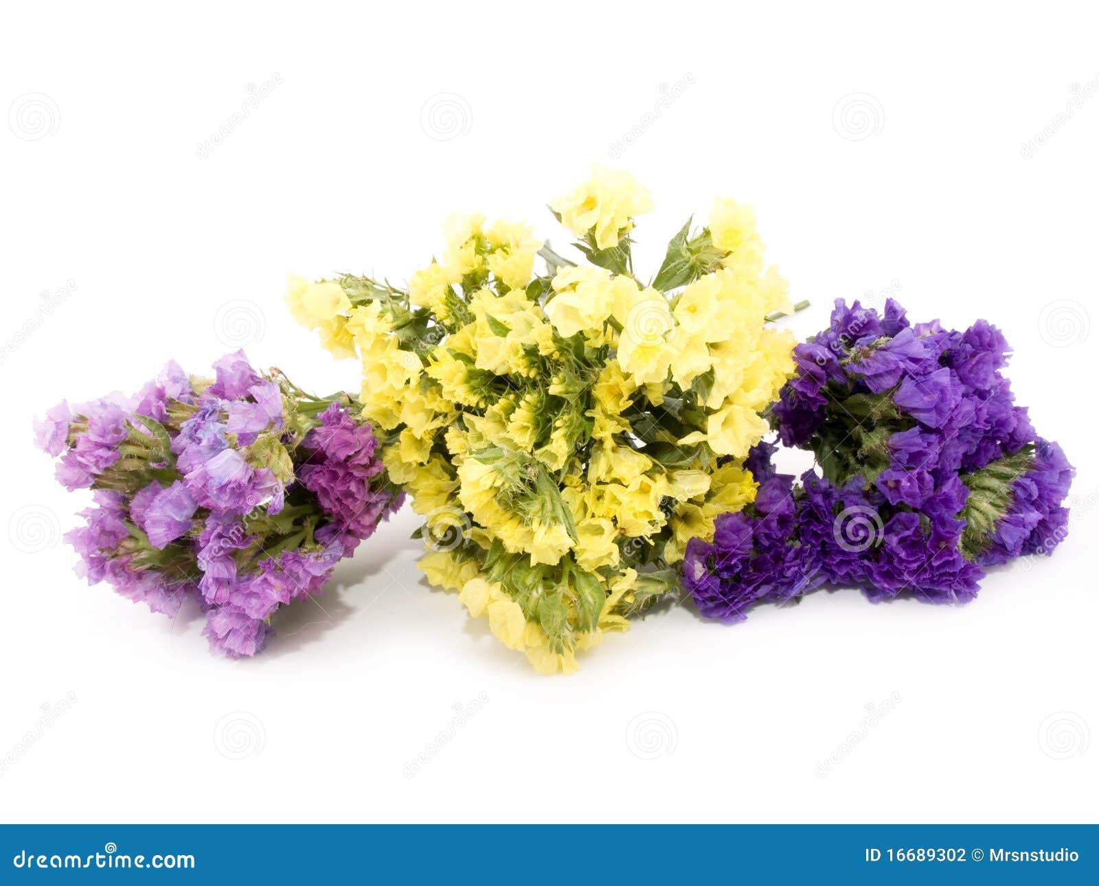 Statice Flowers Limonium Sinuatum Stock graphy Image