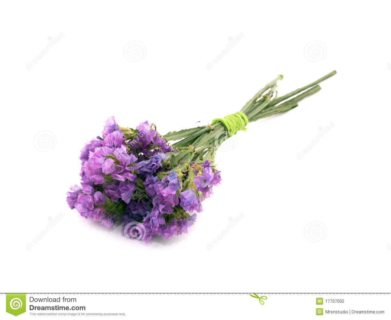 Statice Flowers Limonium Sinuatum Stock Photo Image Of Sinuatum