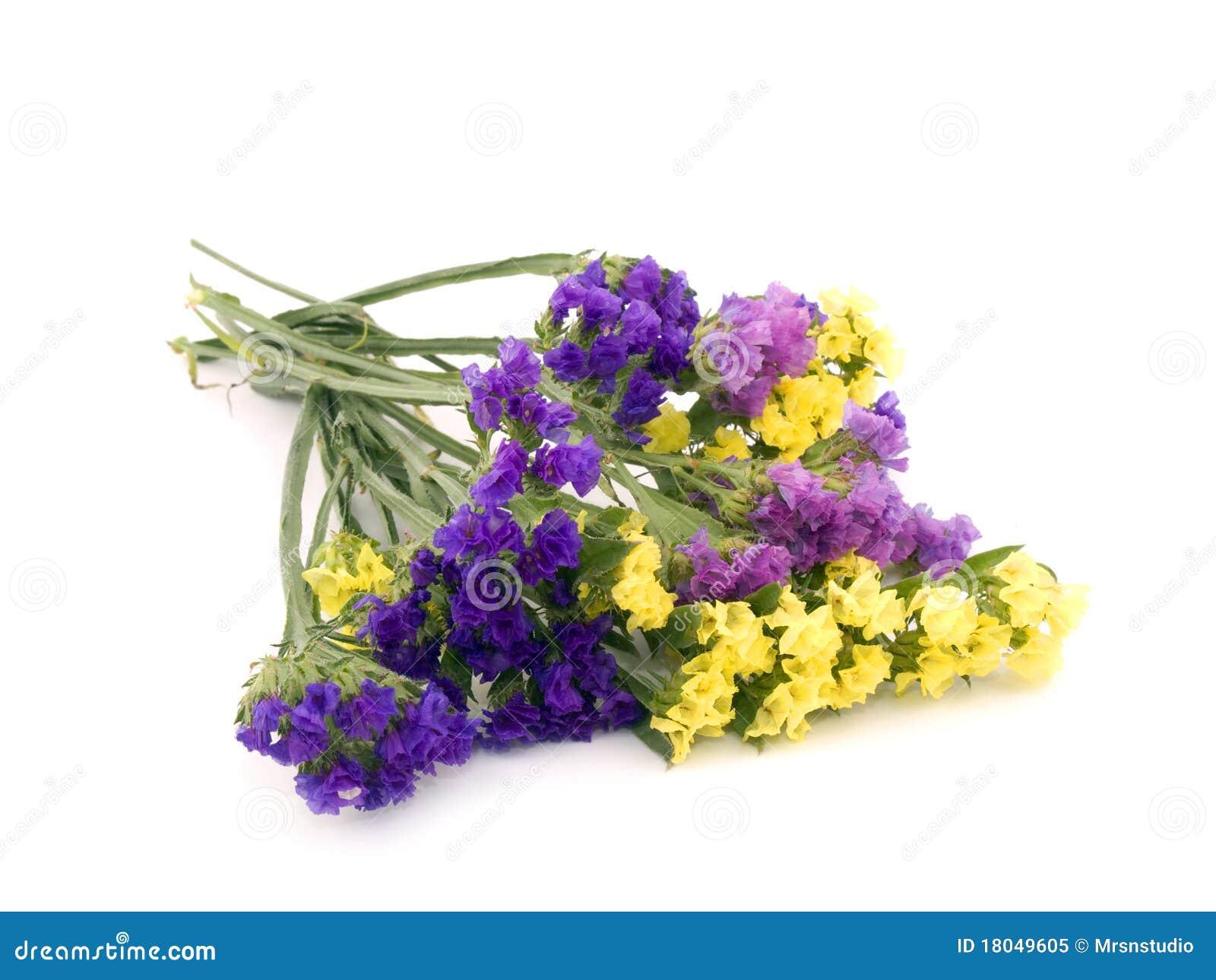 Statice Flowers Limonium Sinuatum Royalty Free Stock Image