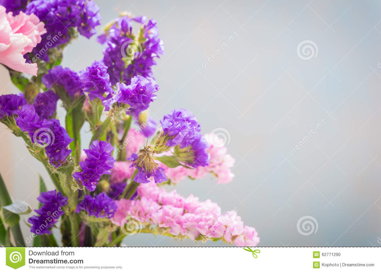 Statice Sinuata Flower Stock Image