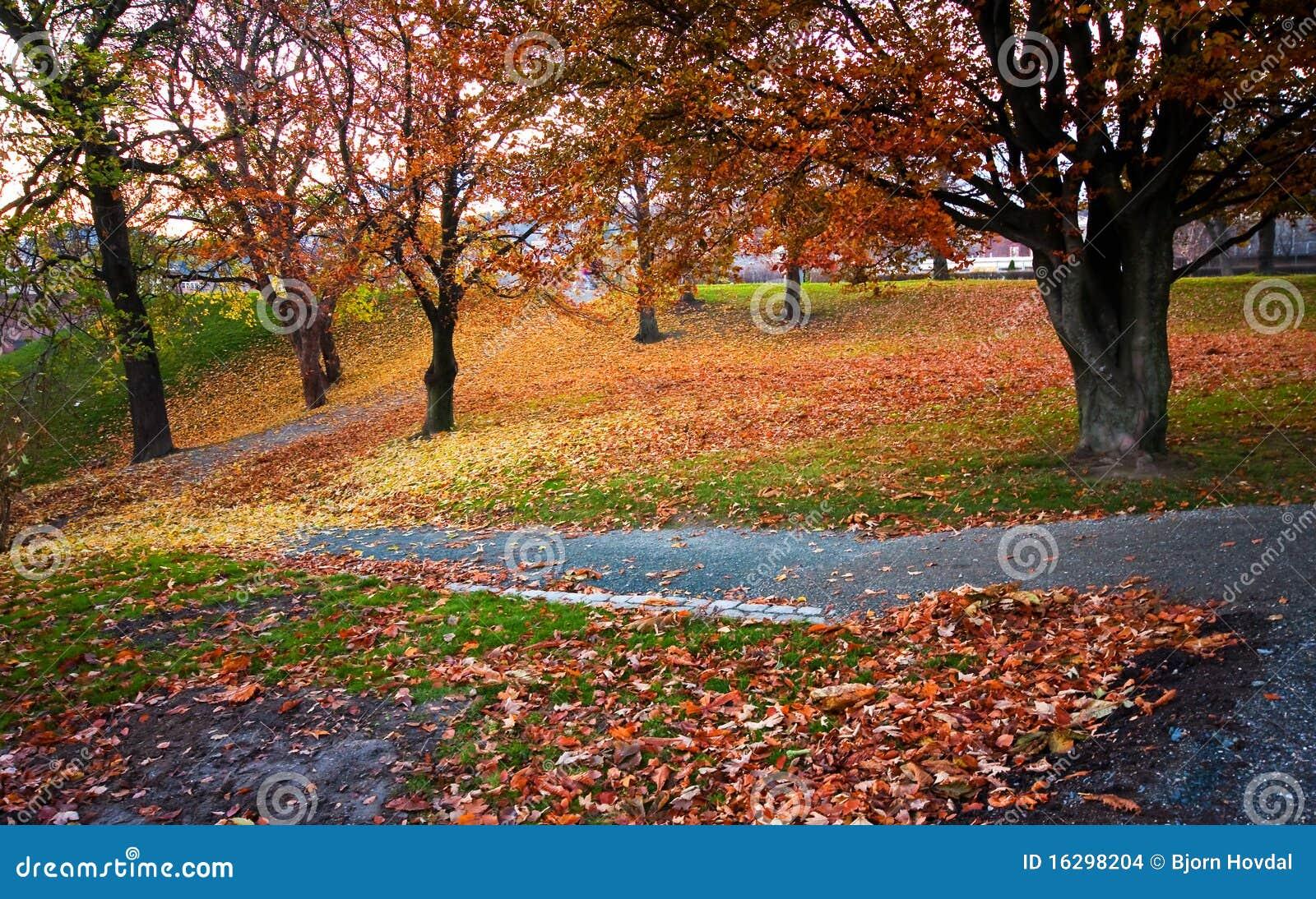 Download Stationnement d'automne photo stock. Image du vibrant - 16298204