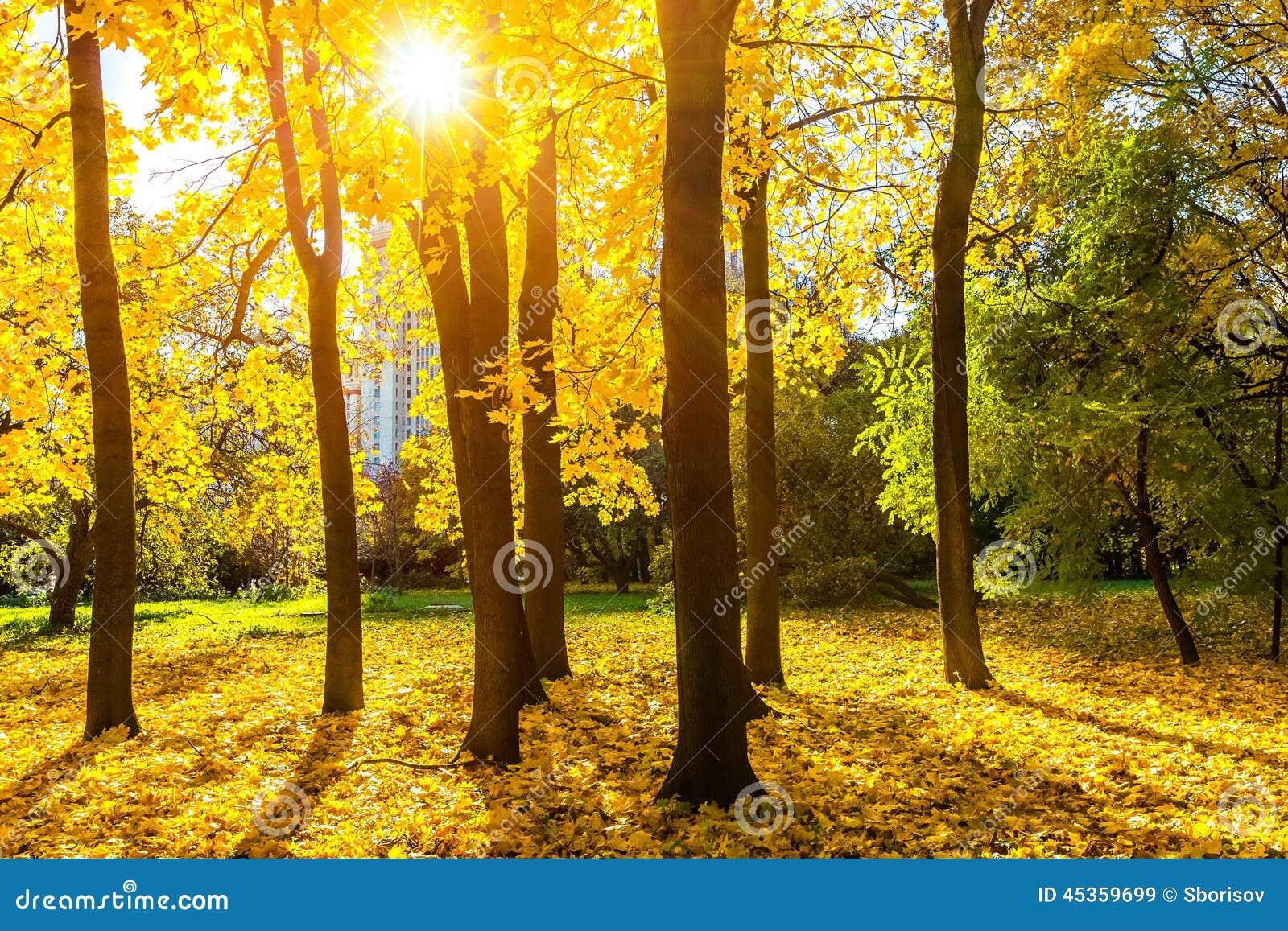 Stationnement ensoleillé d automne