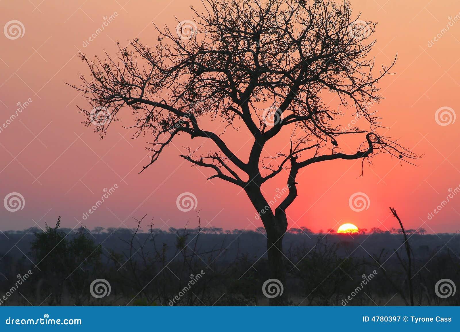 Stationnement national de kruger de coucher du soleil