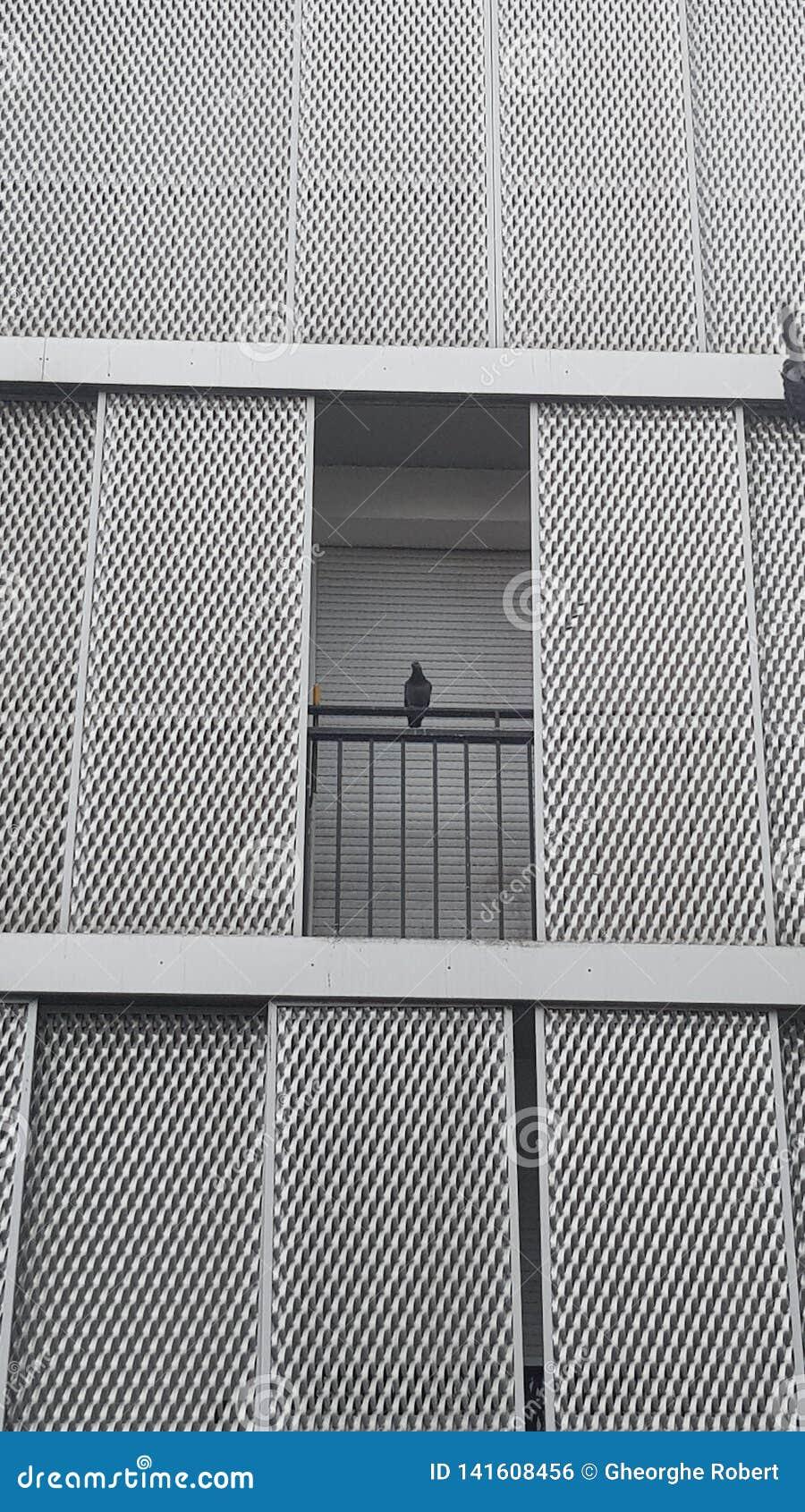 Statische duif