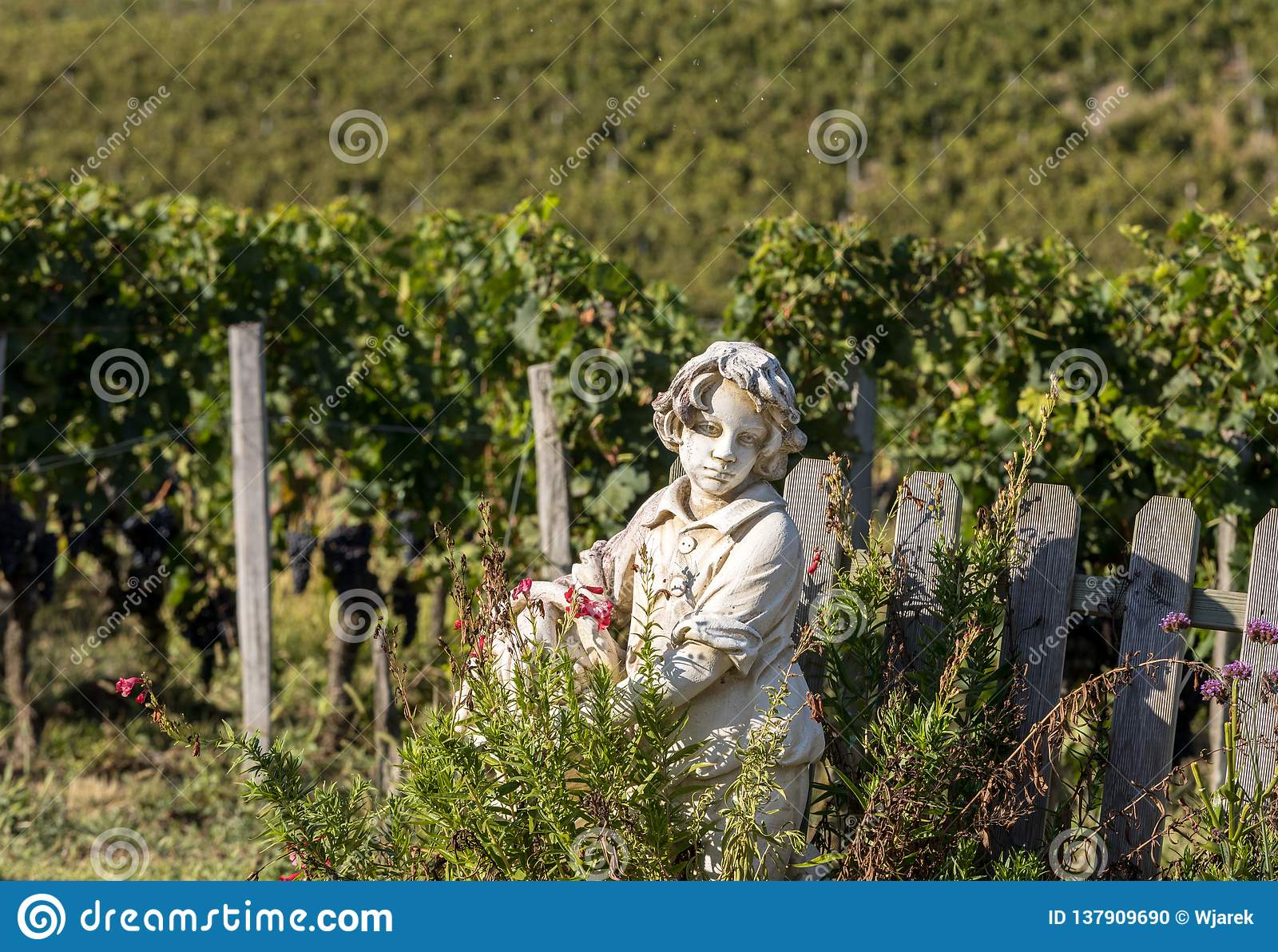 Statue of a boy holding a basket with grapes on the background of vineyards in the Saint Emilion region.