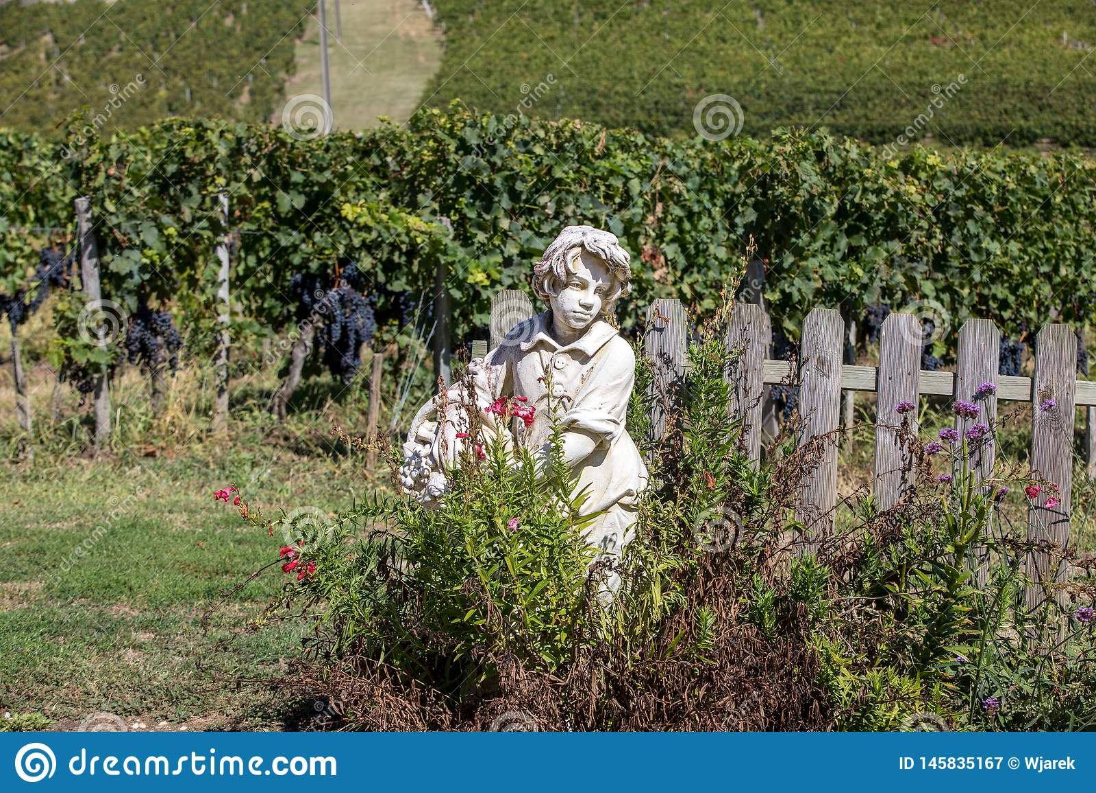 Statue d un gar?on tenant un panier avec des raisins sur le fond des vignobles dans la r?gion de Saint Emilion