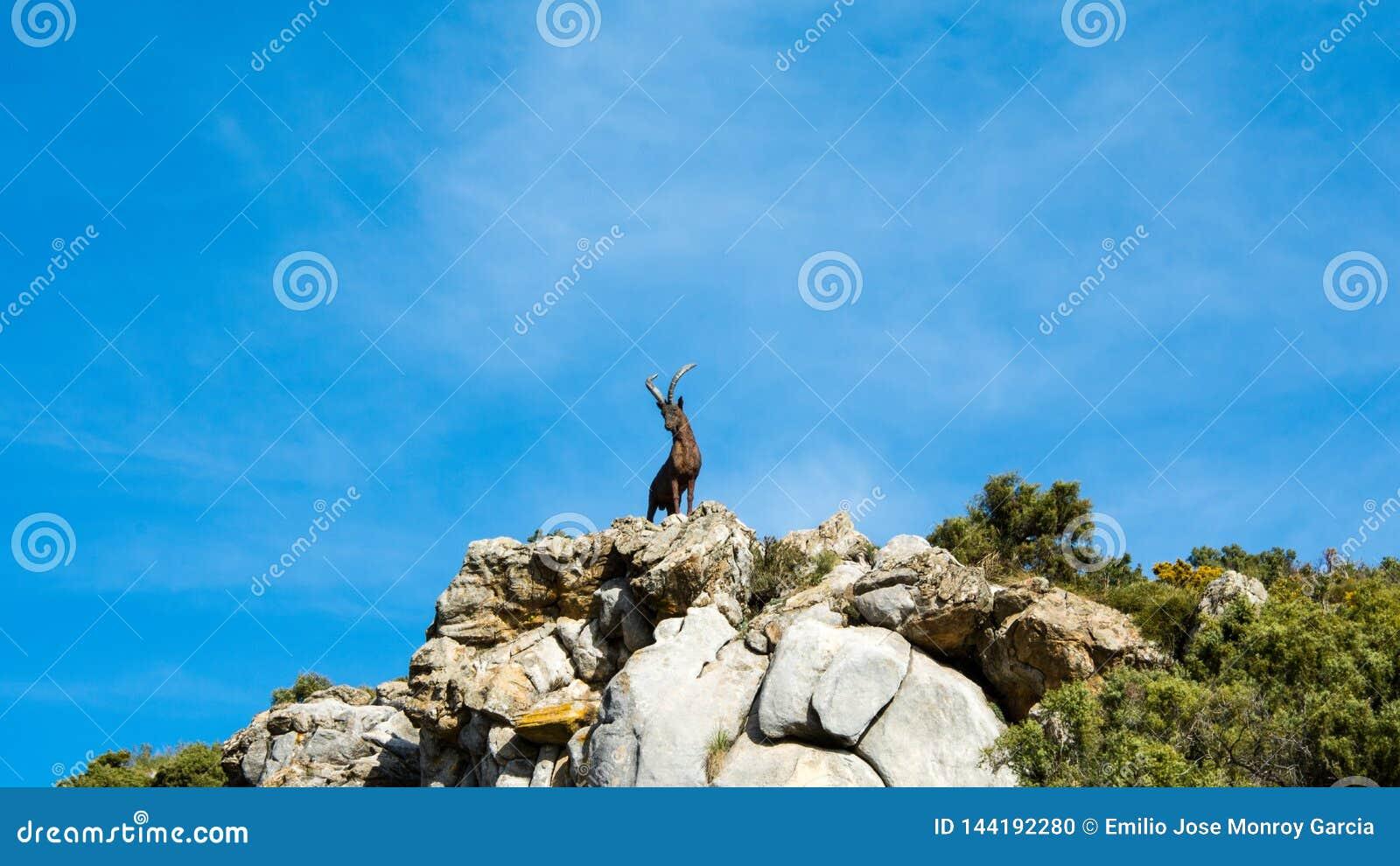 Statue de chèvre dans une montagne à Marbella