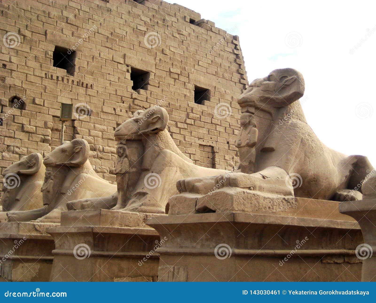 Statues de sphinx avec la tête d une RAM