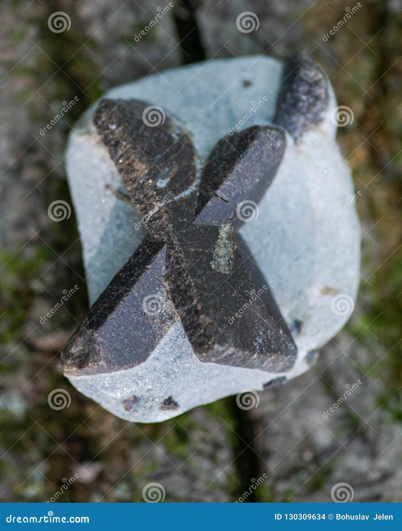 Staurolite - felikt kors från Semiostrovye, västra Keivy, Kola Peninsula, Ryssland På ett trädskäll i skogen Nesosili