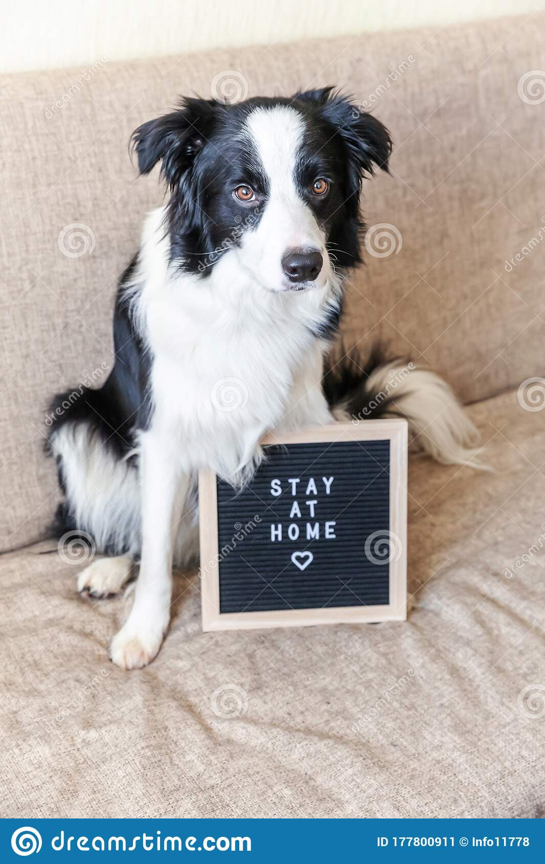 Stay Home Funny Portrait Of Cute Puppy Dog On Couch With Letter Board Inscription Stay At Home Word New Lovely Member Of Family Stock Image Image Of Animal Letter 177800911