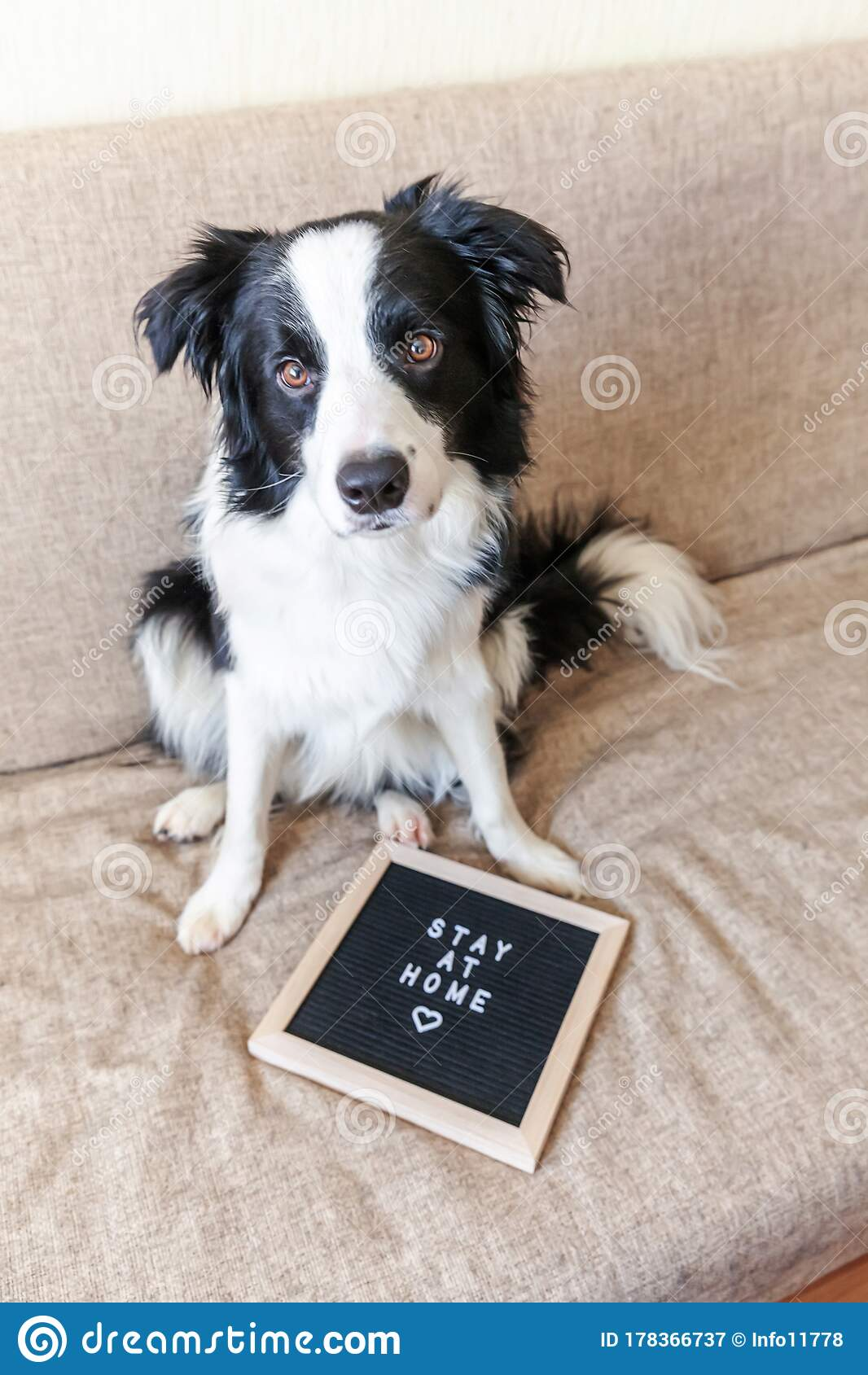 Stay Home Funny Portrait Of Cute Puppy Dog On Couch With Letter Board Inscription Stay At Home Word New Lovely Member Of Family Stock Image Image Of Domestic Indoors 178366737