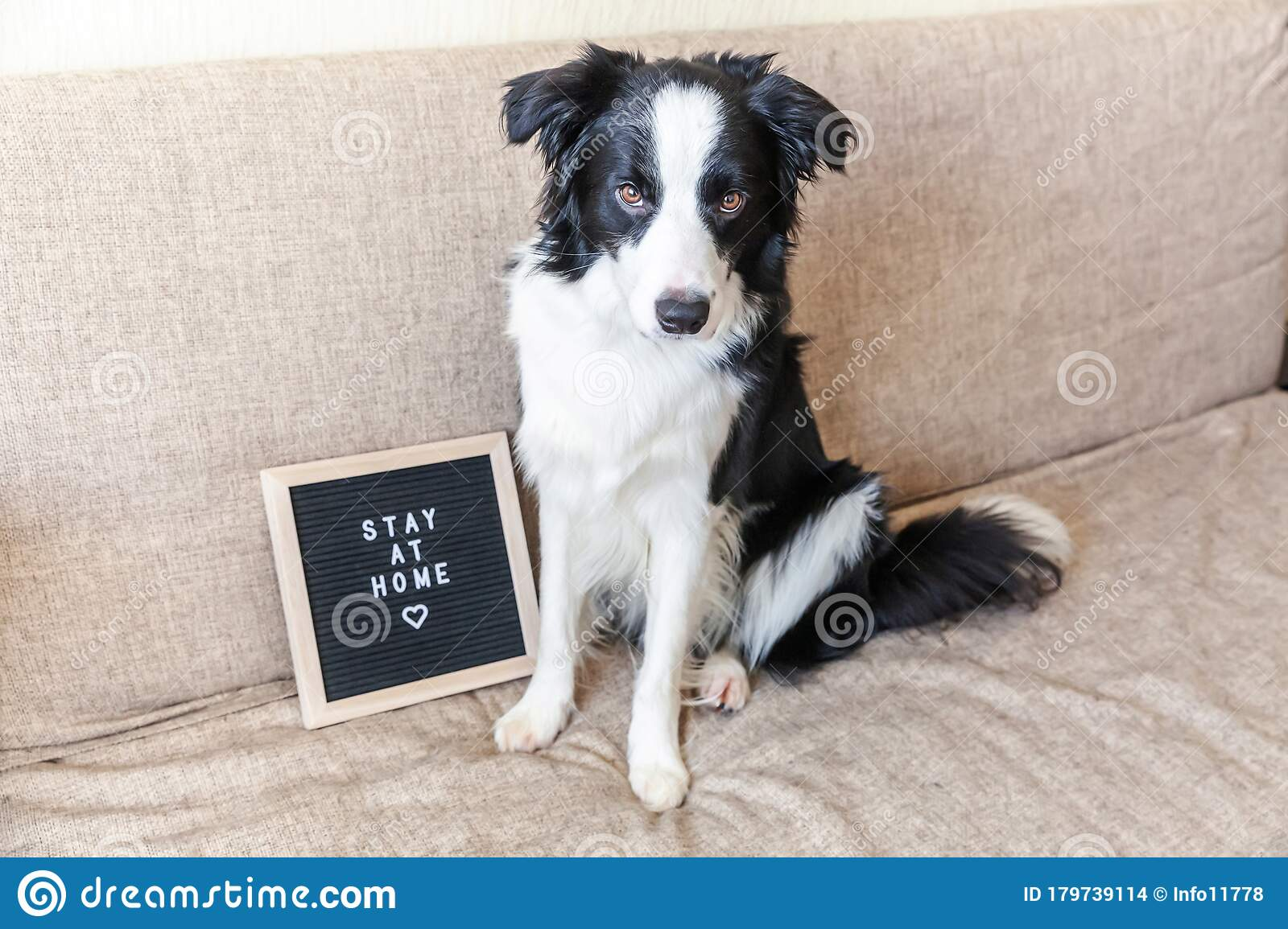 Stay Home Funny Portrait Of Cute Puppy Dog On Couch With Letter Board Inscription Stay At Home Word New Lovely Member Of Family Stock Photo Image Of Animal Floor 179739114