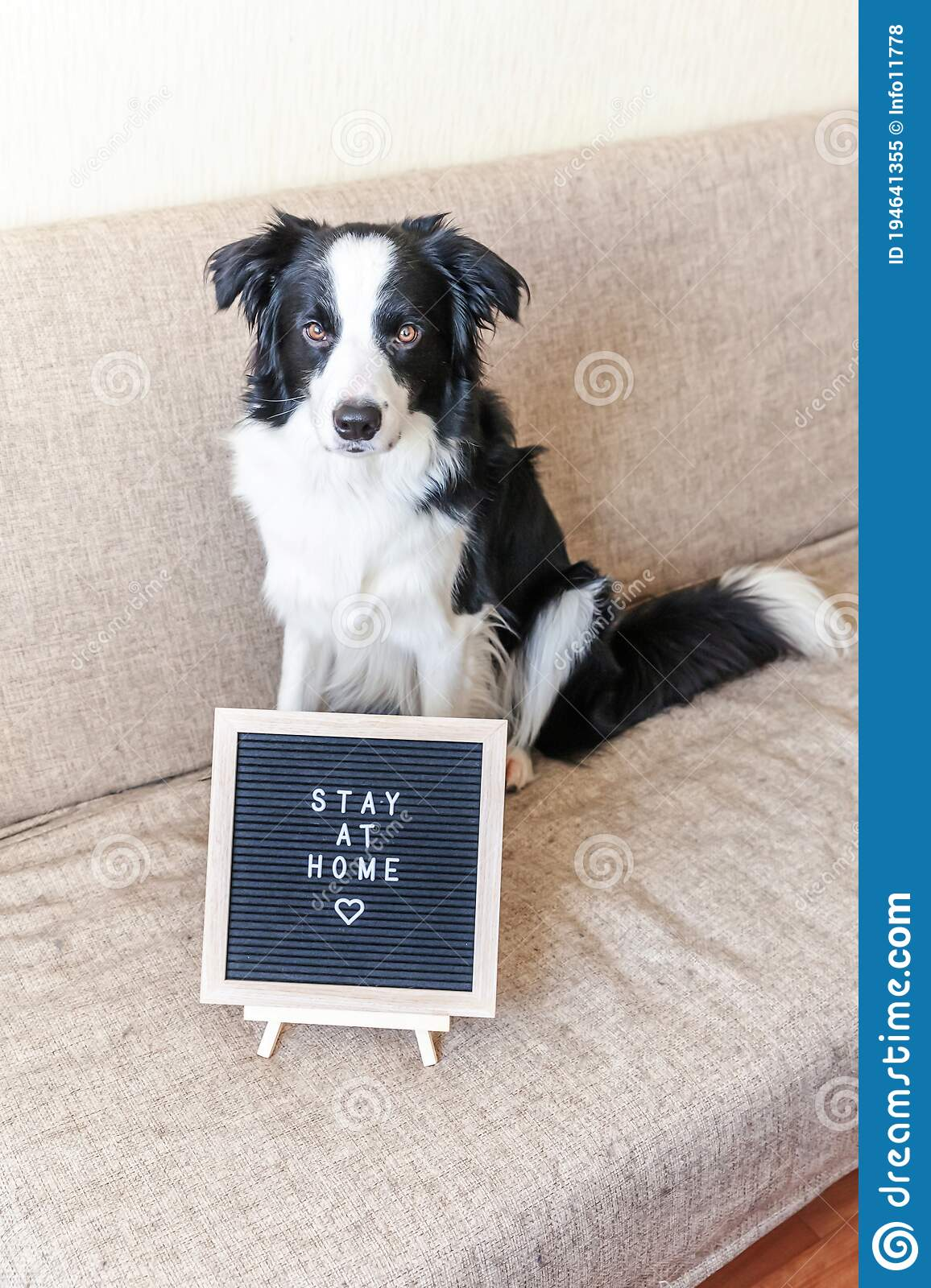 Stay Home Funny Portrait Of Cute Puppy Dog On Couch With Letter Board Inscription Stay At Home Word New Lovely Member Of Family Stock Image Image Of Pedigree Indoors 194641355