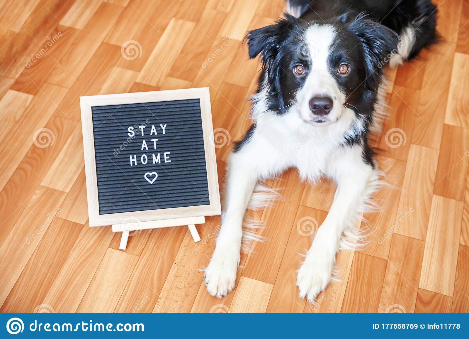 Stay Home Funny Portrait Of Cute Puppy Dog With Letter Board Inscription Stay At Home Word Lying On Floor New Lovely Stock Image Image Of Home Creature 177658769