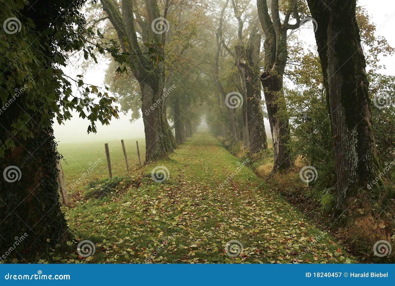 Steeg in de mist