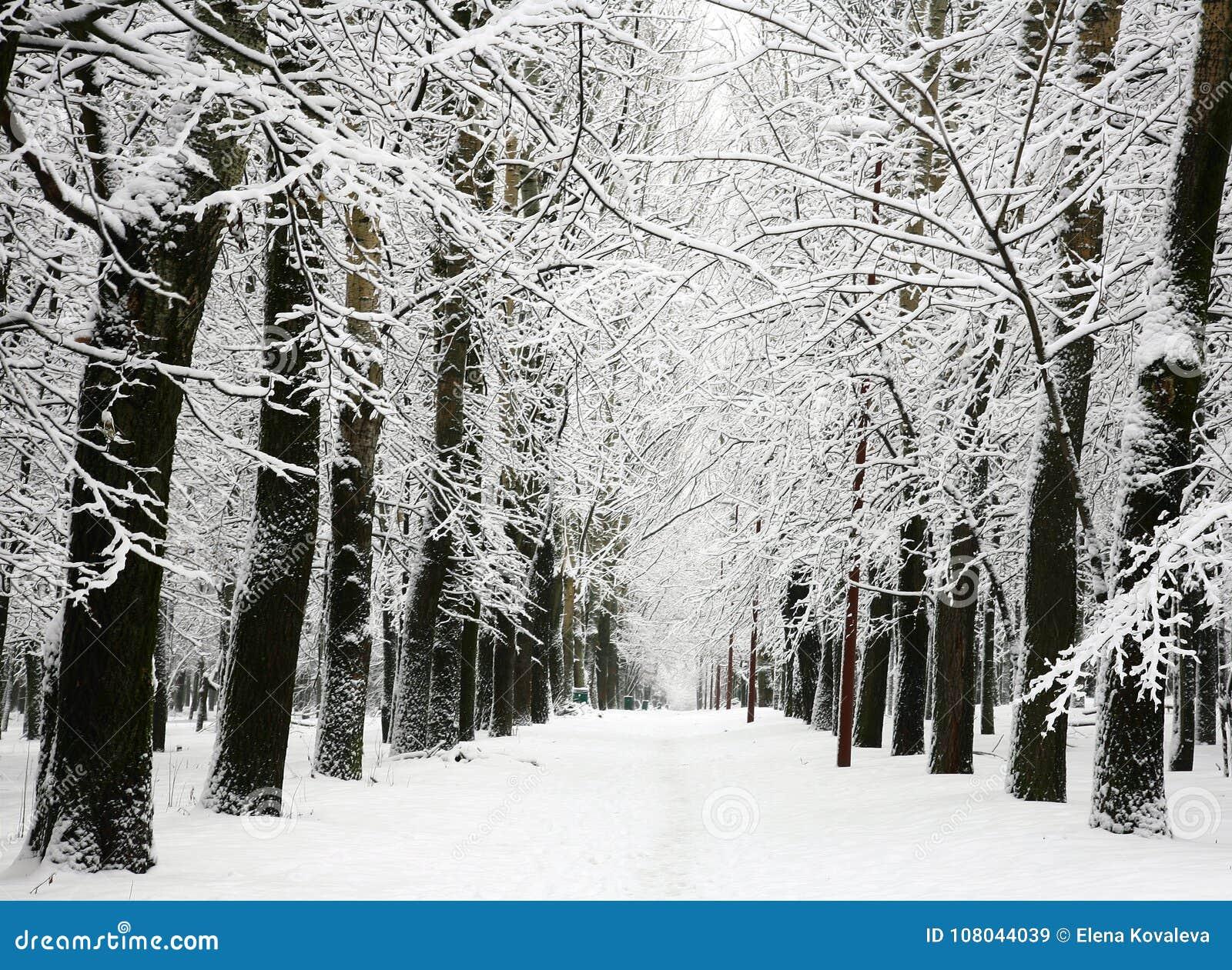 Steeg van bomen met takken met sneeuw worden behandeld die