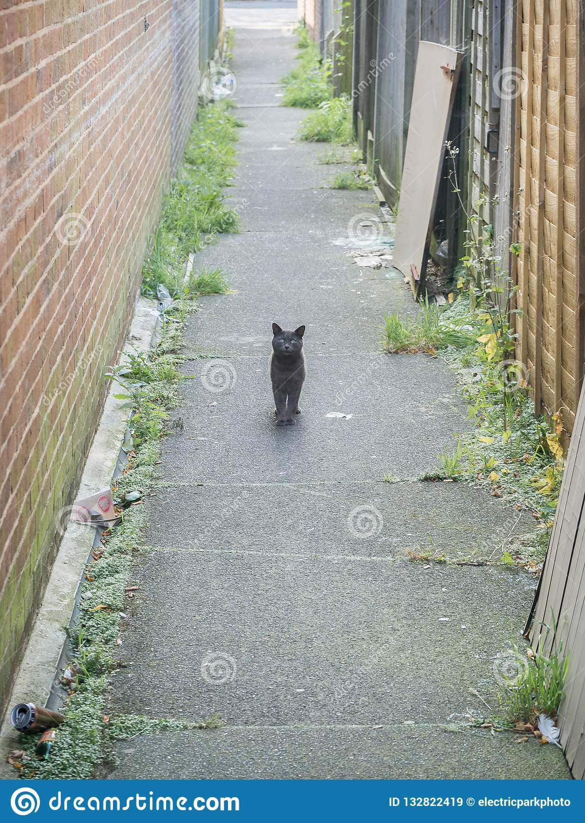 Steegkat, Hampden-Park, East Sussex, het UK