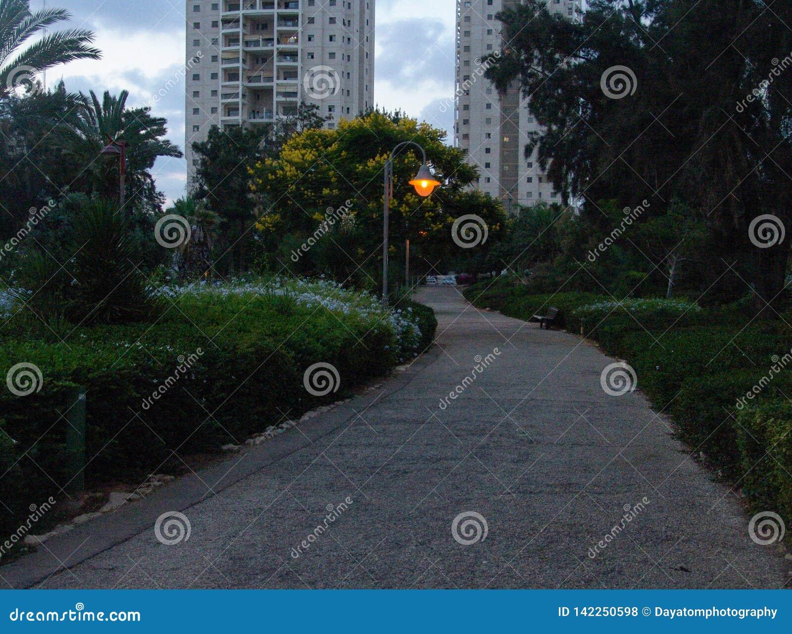 Steegpark met gele bloeiende bomen aan de kant met een aangestoken stadslamp in de afstand en de lange gebouwen