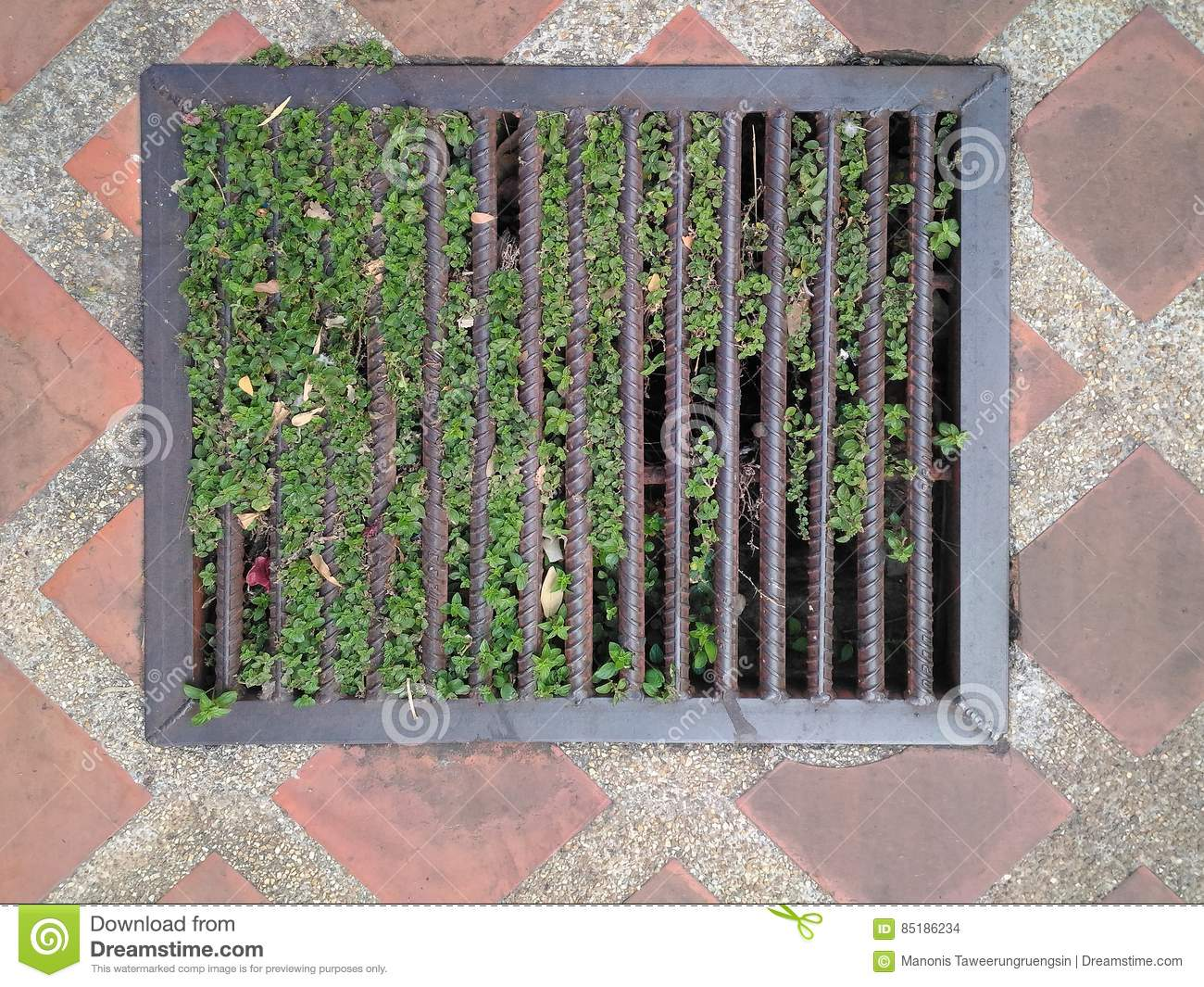 Steel Grating Drainage Street Sewers Have A Small Tree Climber To ...